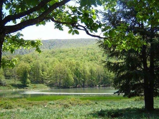 غابة اكفادو