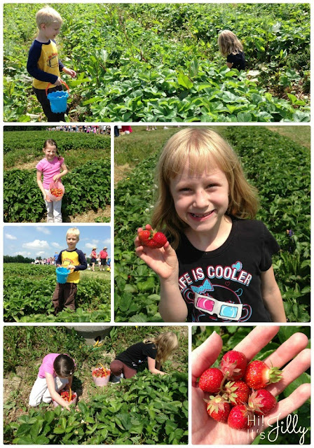 Wordless Wednesday: Picking Strawberries | Hi! It's Jilly