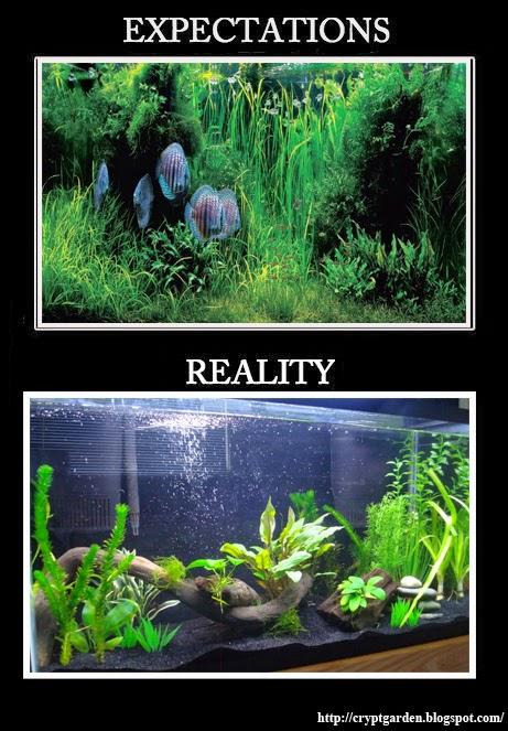 Aquarium memes