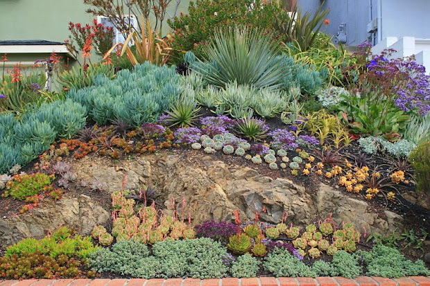 vida suculenta succulents gardens
