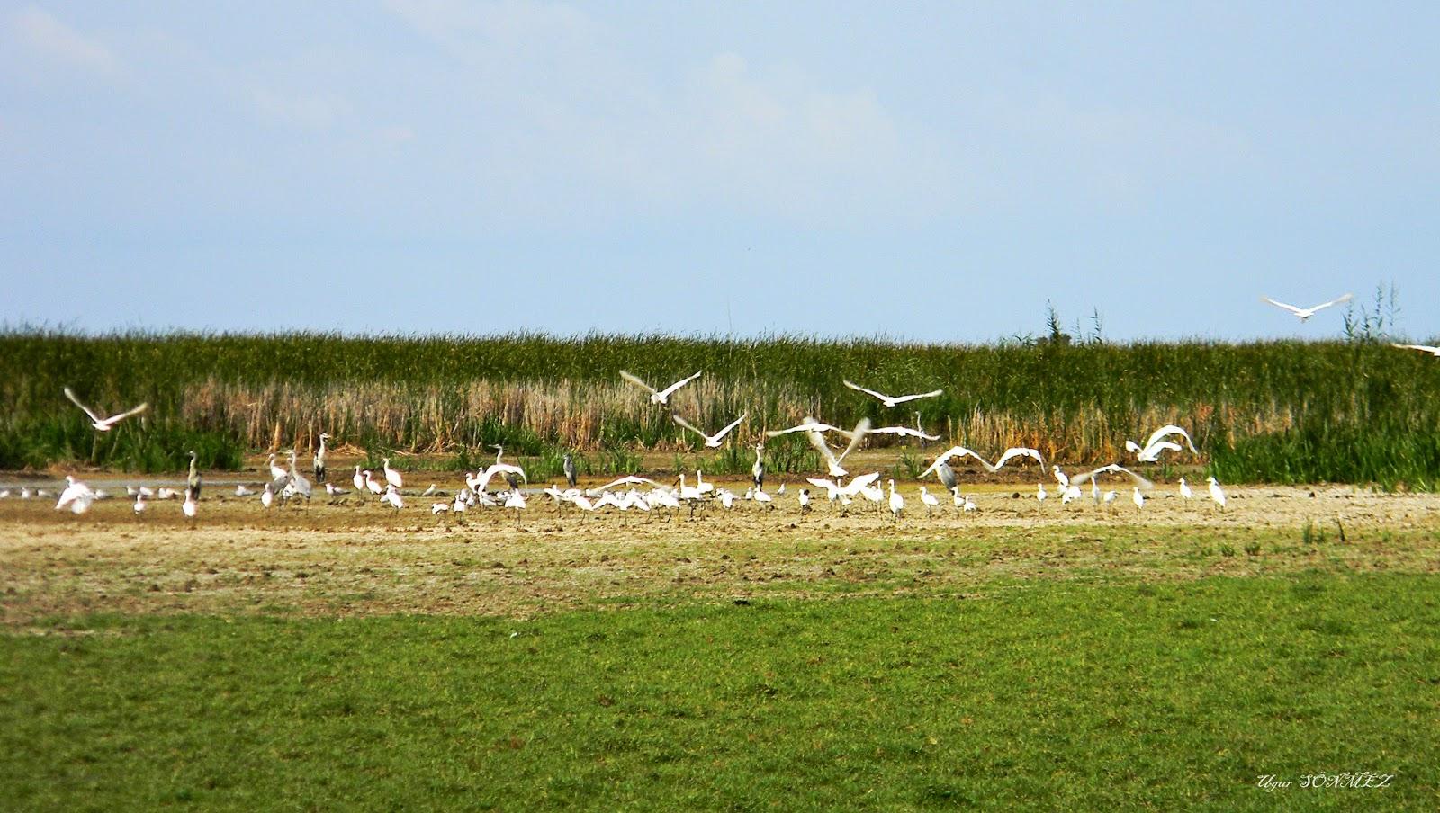 Tourism Life in Turkey: Samsun Kızılırmak Deltası Kuş ...