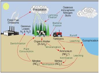 Daur nitrogen sma al hikmah muncar gambar berikut memperlihatkan tiga diagram siklus nitrogen yang sangat kompleks tersebut nitrogen di perairan sebagai molekul n2 terlarut ccuart Image collections