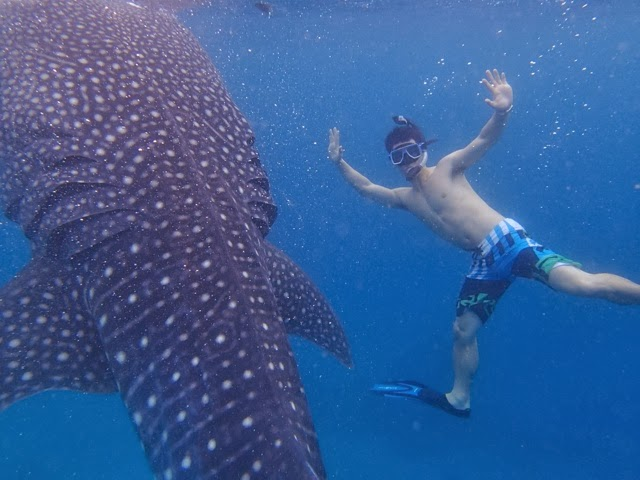 guest post whale shark watching tours in oslob beautiful