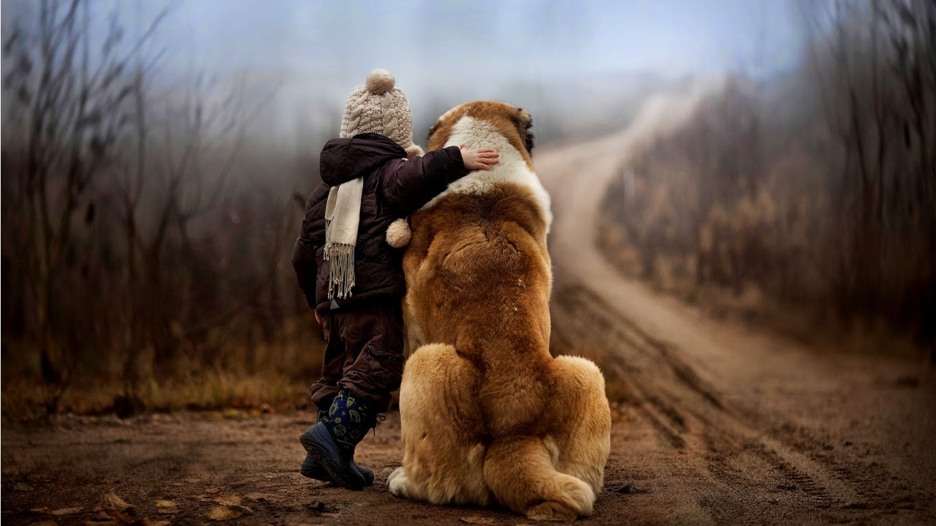 Child and Animal Friendship HD wallpapers