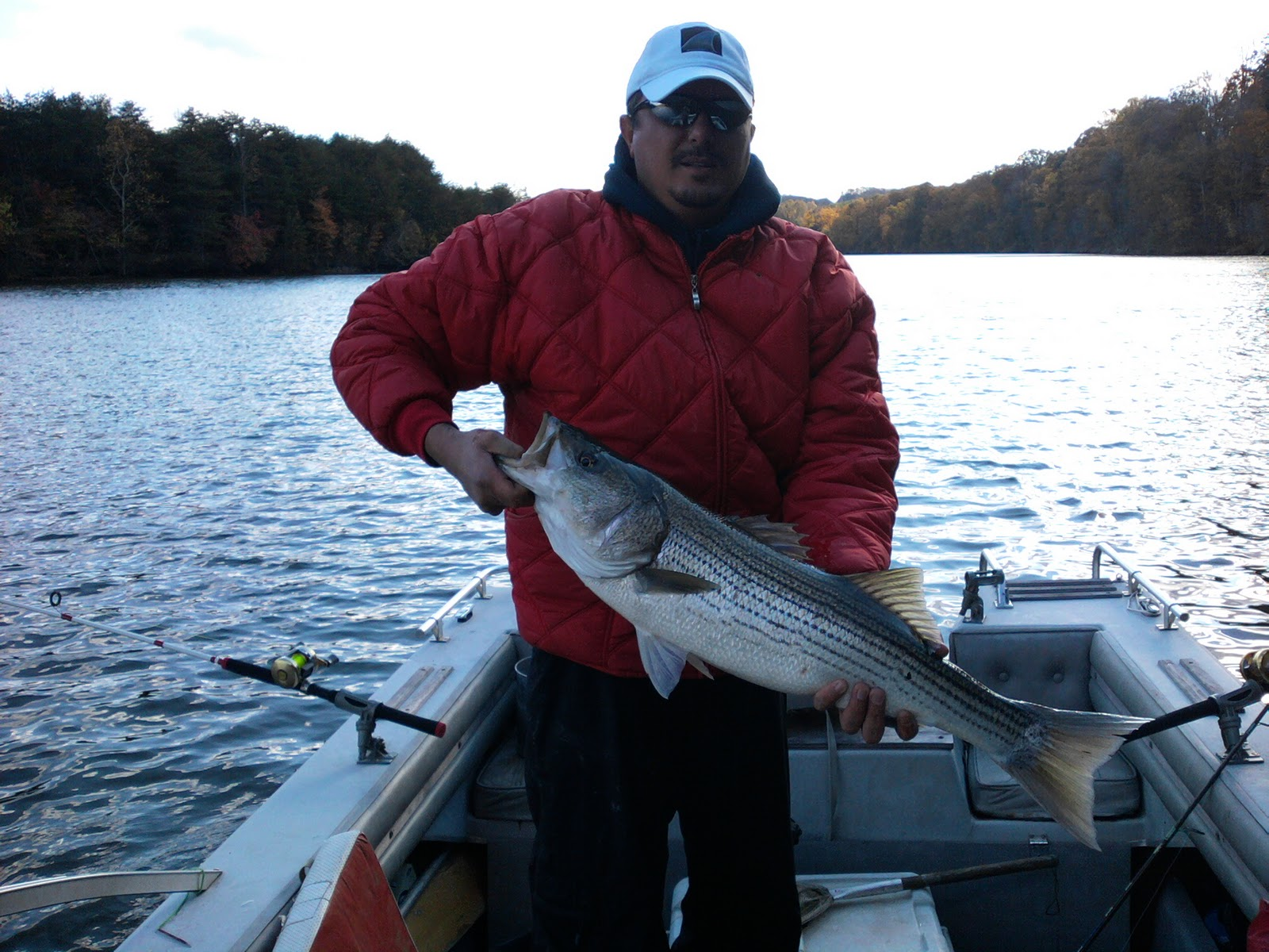 Something 39 s fishy smith mountain lake stripers for Smith mountain lake striper fishing