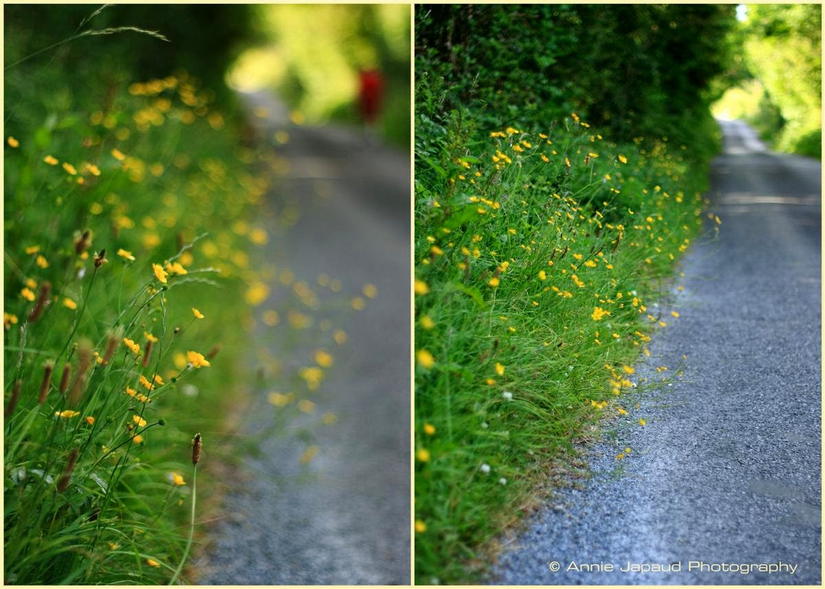 collage, summer images, grass, road, green