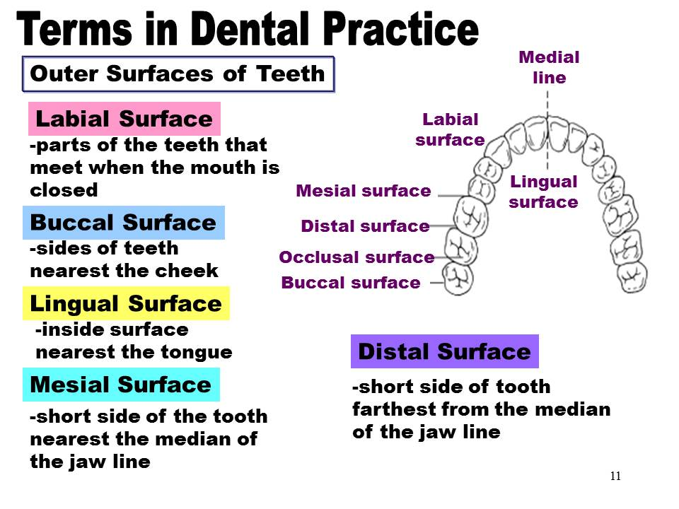 Dentistry  Terms In Dental Practice