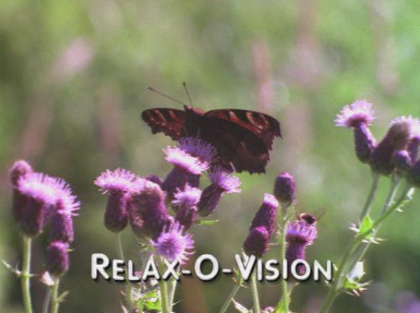 Freakazoid Relax-O-Vision - Animated Shorts