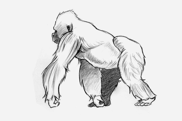 Sonjebasaland Animal Drawing Gorilla