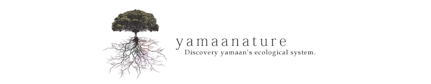 yamaanature