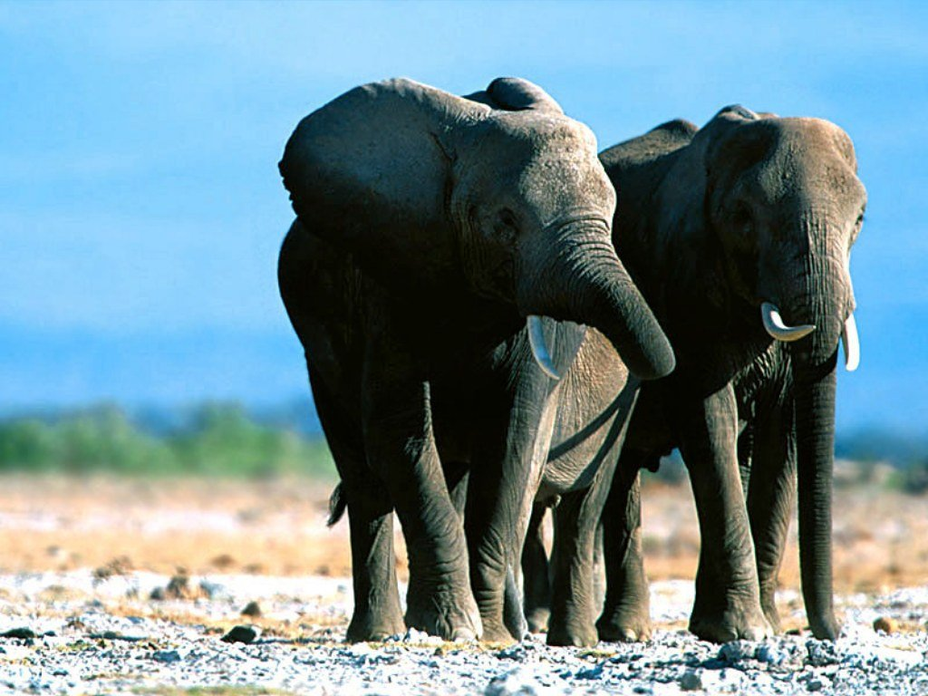 image gallary 3 beautiful elephant wallpapers for desktop