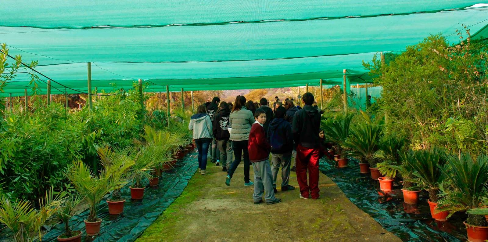Mural electr nico fundaci n la semilla taller de palma for Vivero hijuelas