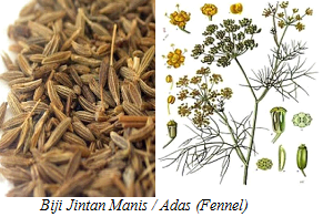 khasiat herba dan ulam