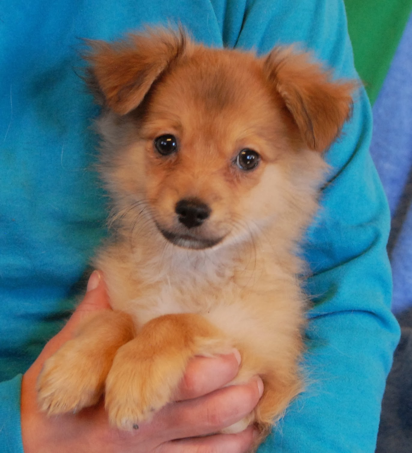 Small Dogs At Spca
