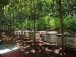 Madu Hutan