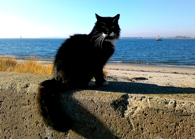 black cat sitting on sea wall