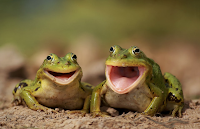 The Frogs say: