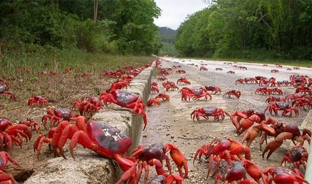 These 20 Unbelievable Pictures Might Look Like An Illusion But They Are Absolutely Real - Assembly Of Crabs