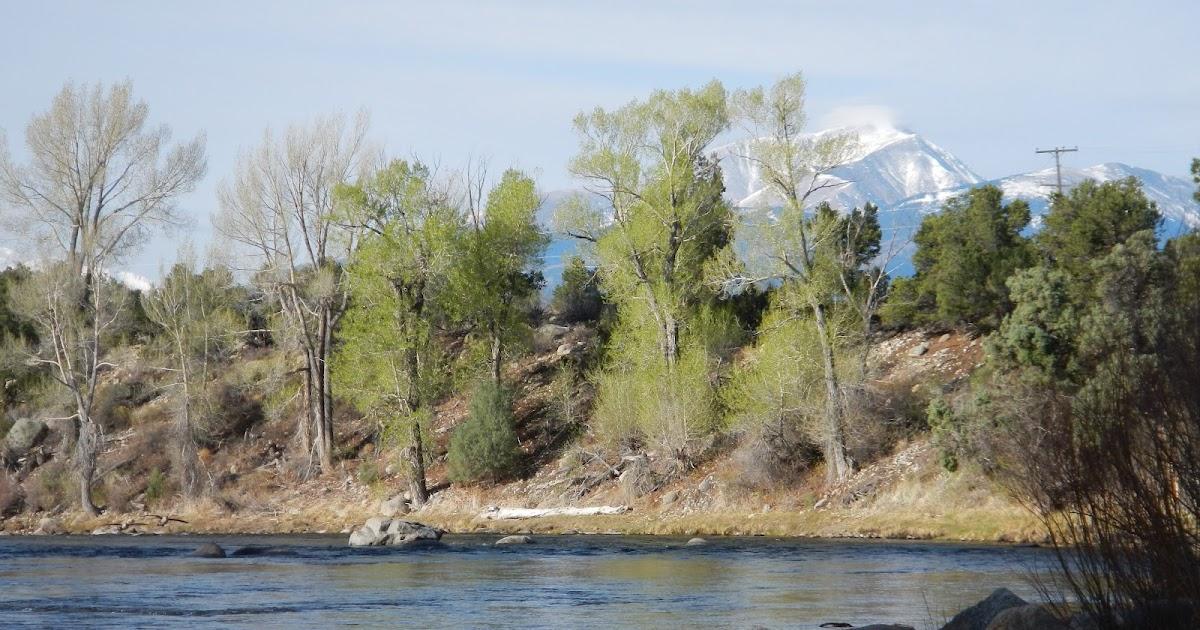 Fish Spotter: Upstream Float