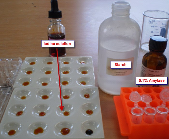 experiment of starch mixed with amylase For the starch and amylase experiment,  then, we put cooked starch inside a beaker and mixed the starch with amylase we got a piece of dialysis tubing and,.