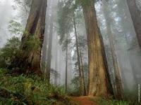 gambaran umum pohon jati
