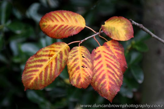 Autumn leaves, yellow, green and orange photograph