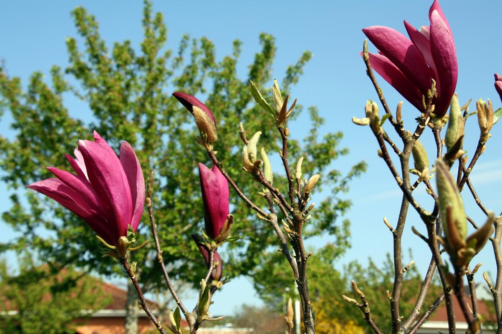 frk tulles blomster