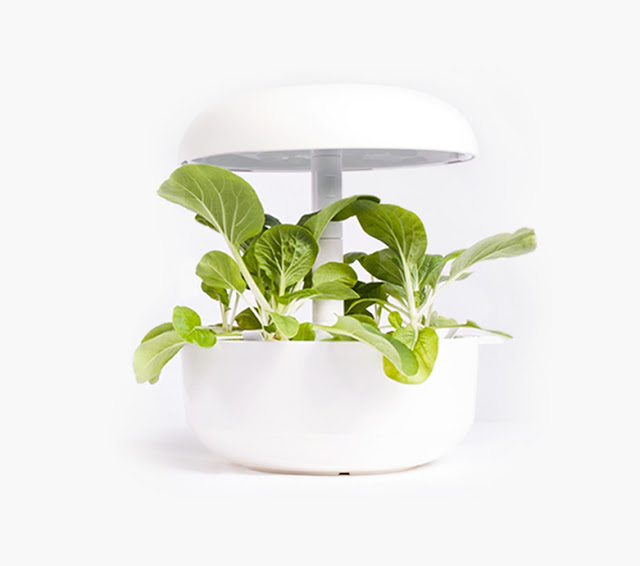 Plantui 6 Smart Garden | Anyonita-nibbles.co.uk