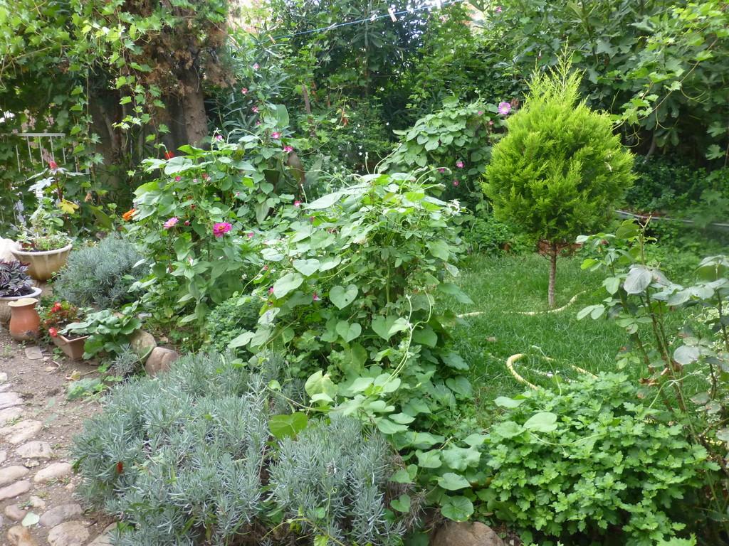 Les balades de Lison: Mon jardin de curé