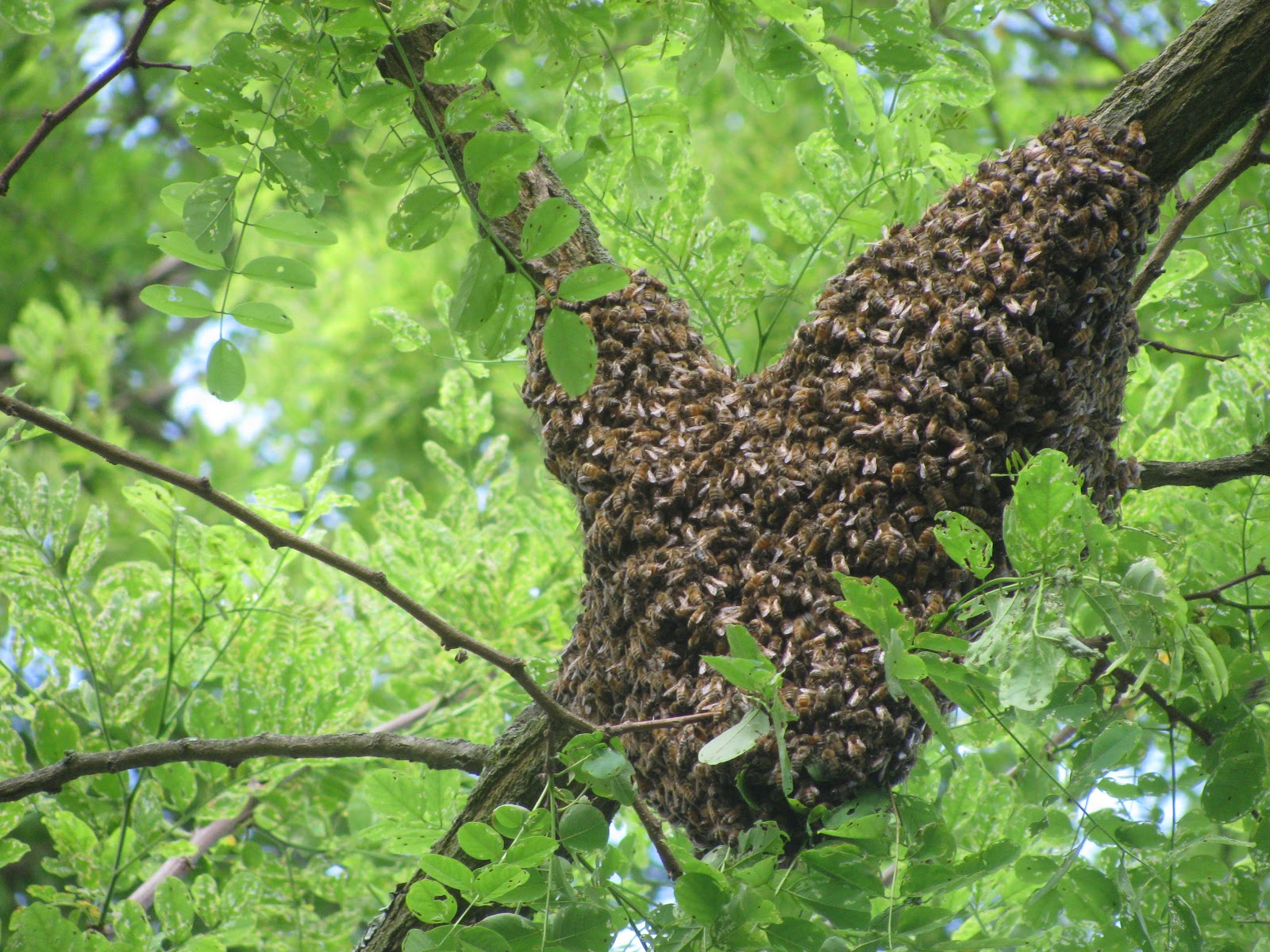 allegheny mountain wanderings living with bees