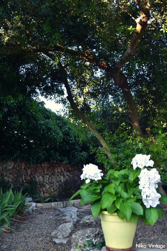 jardin, exteriores, hortensia, camino