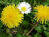 Ricette botaniche con i fiori e le piante commestibili