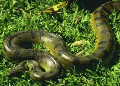 Foto de Serpiente