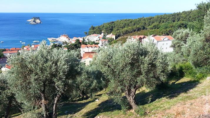 Оливковые рощи и хвойные леса