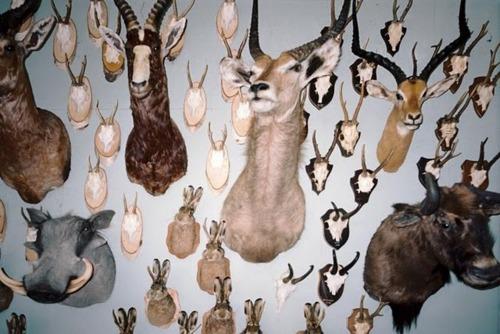 Antlers-Taxidermy.jpg