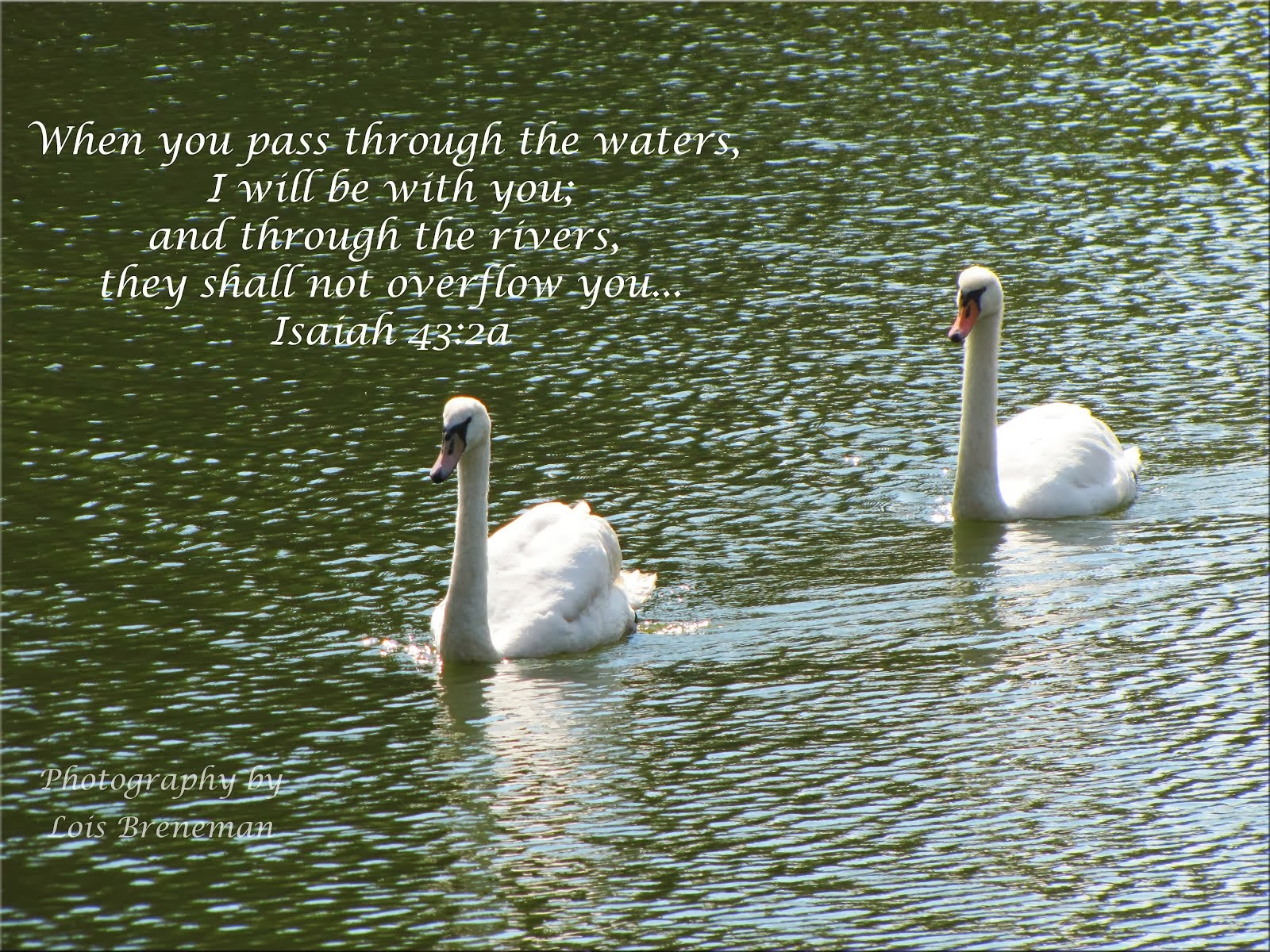 Swans - Isaiah