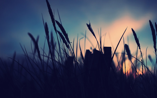 Minimalistic Nature - Grass in sunrise