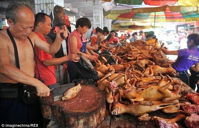 Cadáveres de perros en China