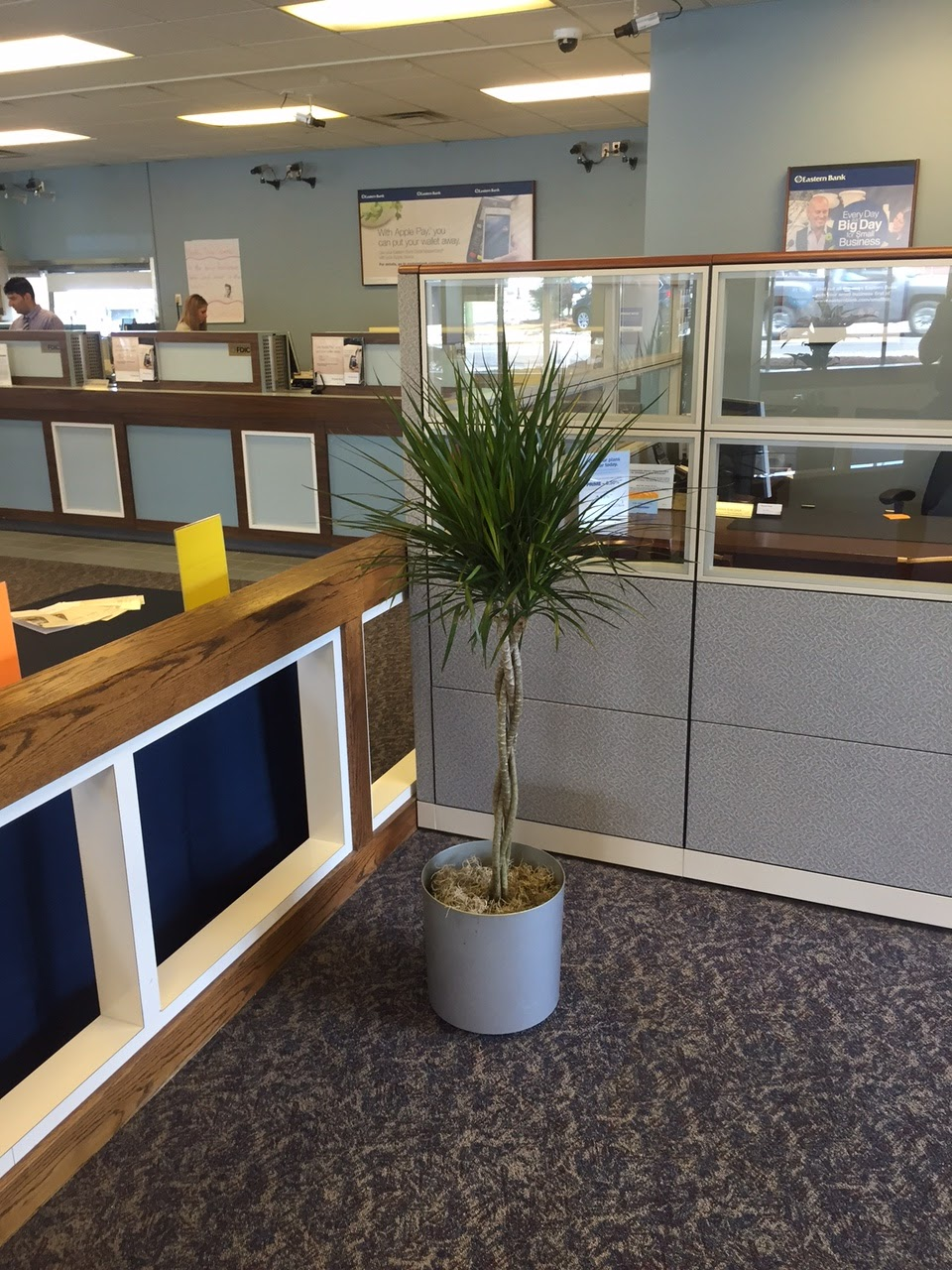 Interior Plant Maintenance;office Plant Service;indoor Plant Design And  Service;