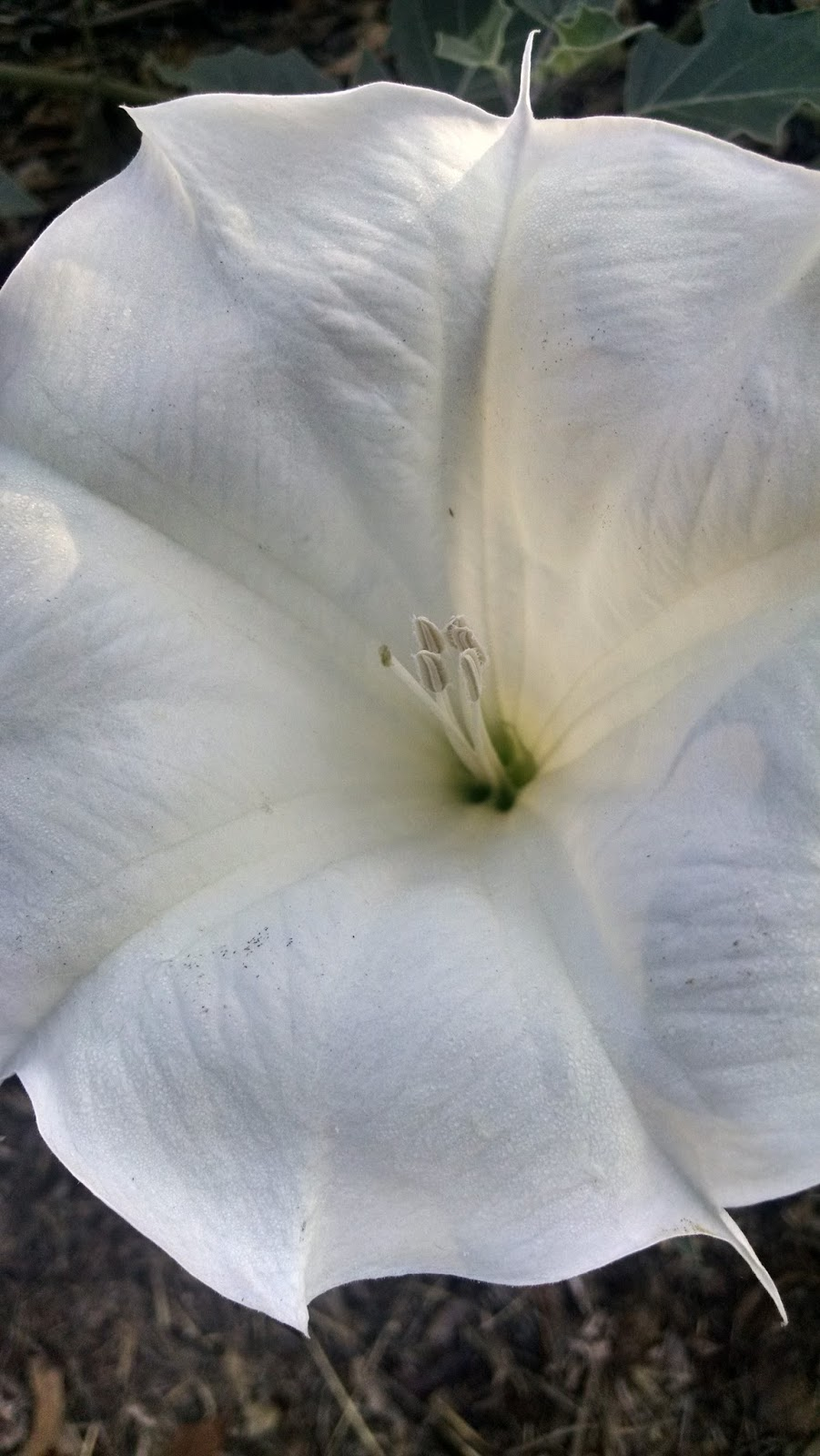 Searchresearch Answer The Story Behind A Beautiful White Flower