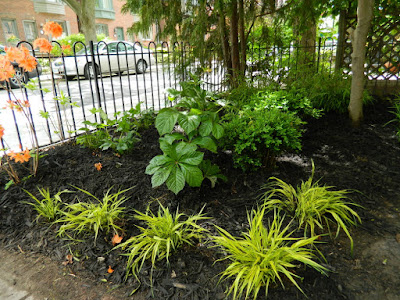 Summerhill front garden renovation after by Paul Jung Gardening Services Toronto