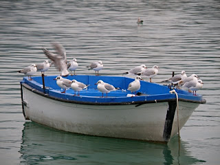 Gavines en una barca