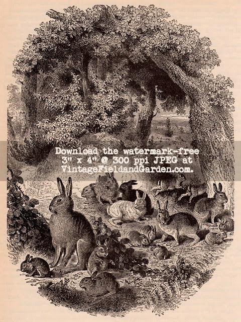 http://2.bp.blogspot.com/-APmOEJ6DrpE/U0ko2khIqpI/AAAAAAAAIn4/hqTm1EoB8Dk/s640/1879+A+Warren+of+Rabbits+(Preview).jpg