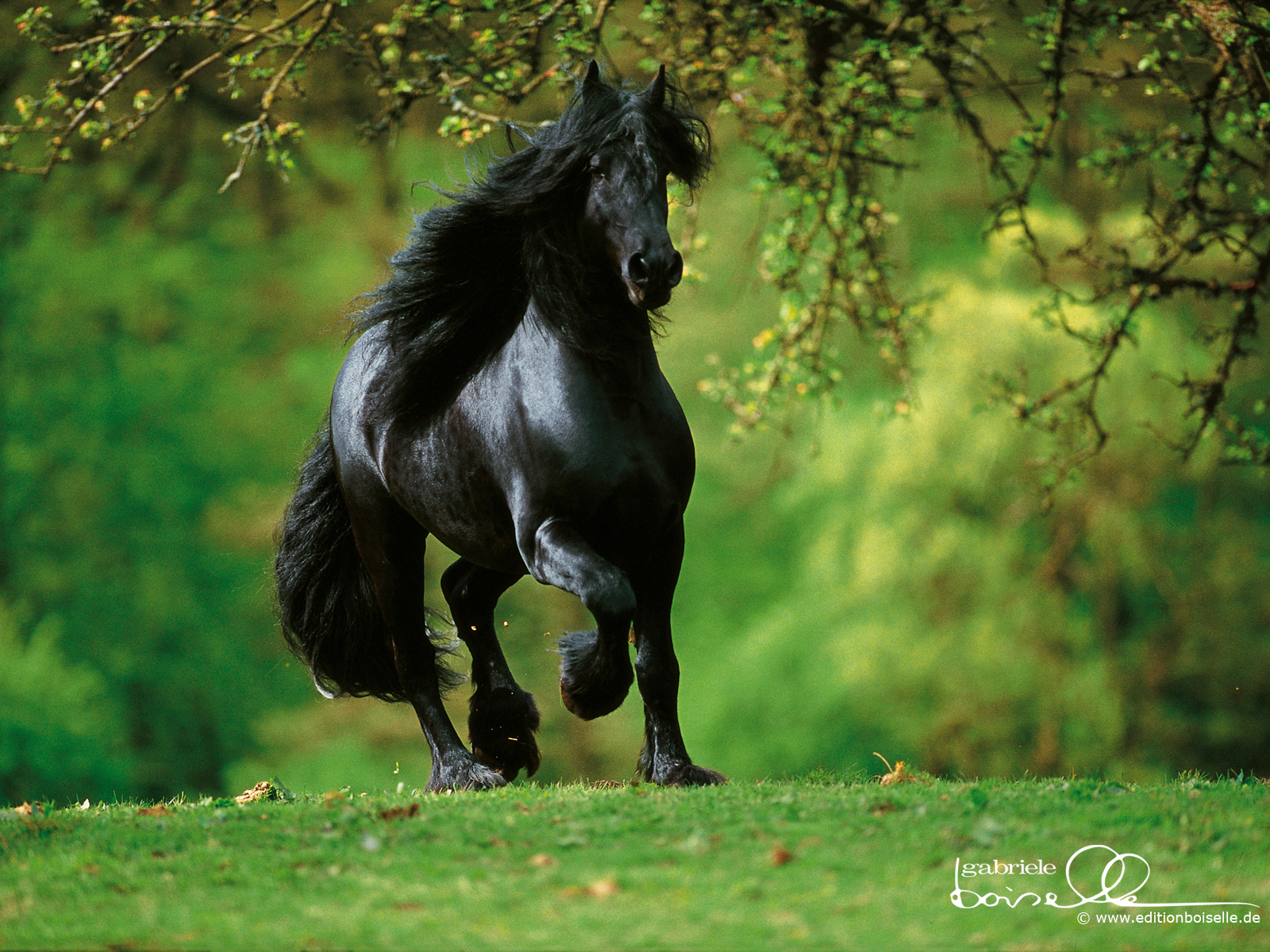 Amazing   Wallpaper Horse Nature - 1+(18)  Collection_46378.jpg