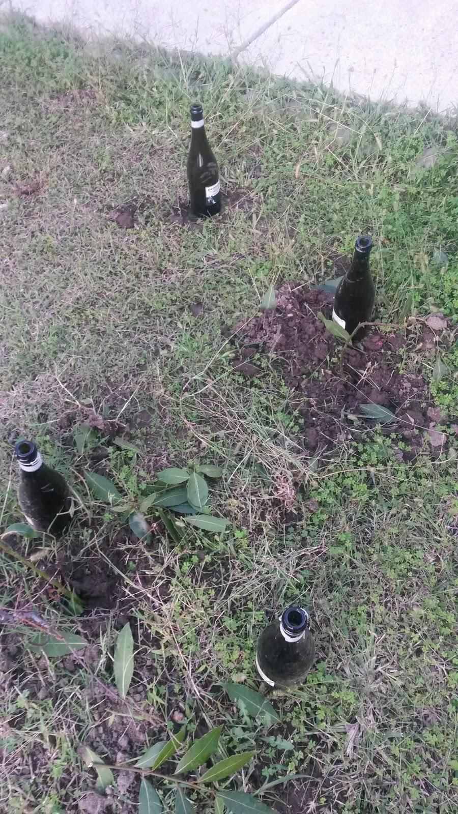 Associazione melting pot recuperiamo e ricreiamo for Talpe in giardino