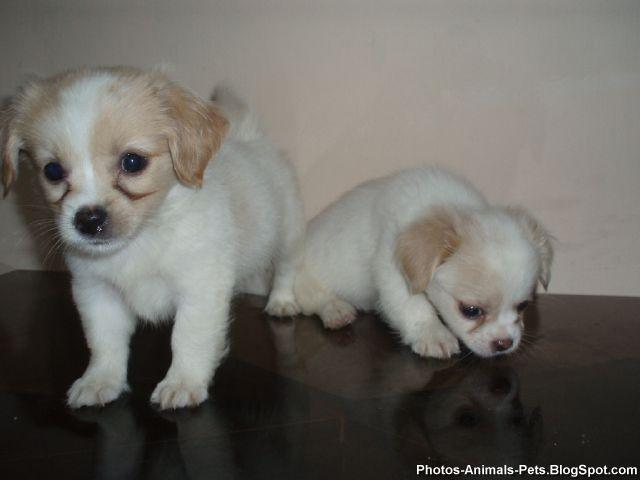 http://2.bp.blogspot.com/-AQ54SxPpyCw/TY3Z-rB02II/AAAAAAAAAPM/xndwcSceajc/s1600/Photos%2B-puppy%2Bdogs_0002.jpg