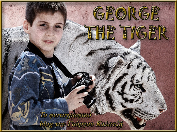GEORGE THE TIGER