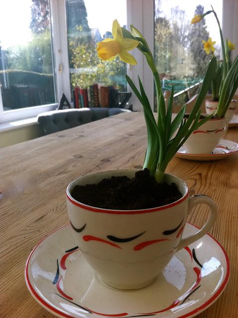 diy plant teacup
