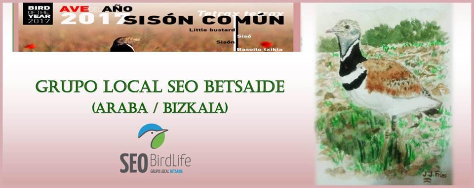 SEO Betsaide