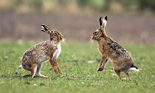 beautiful images of animal hare photos